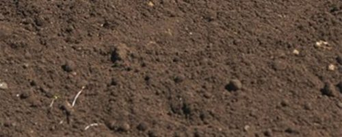 sheringhs recycled top soil